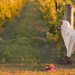 Se marier dans les vignes !
